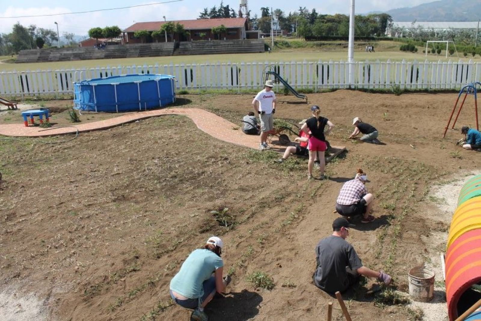 Transplanting Grass
